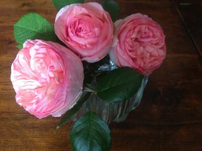 Rosier pierre de ronsard domaine du megnon - Puceron rosier savon noir ...