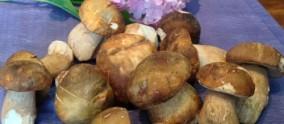 Cèpes au Mégnon